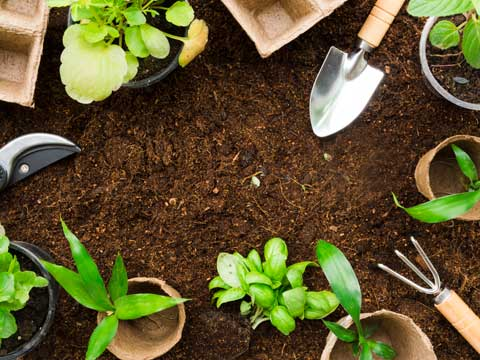 Course Image آموزش اصول باغبانی